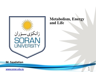 Metabolism , Energy and Life