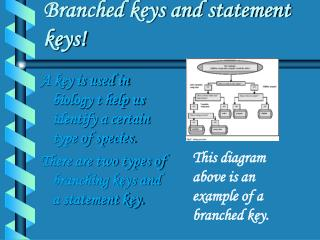 Branched keys and statement keys