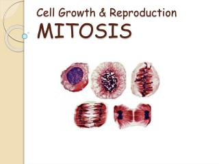 Cell Growth & Reproduction MITOSIS