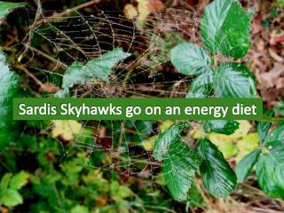 Sardis  Skyhawks  go on an energy diet