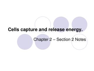 Cells capture and release energy.