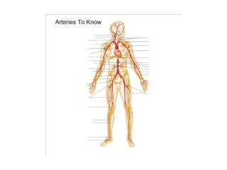 Arteries To Know PPT
