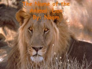 The Name of the Animal: Lion By: Noam