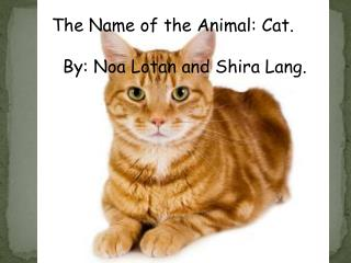 The  N ame of the Animal: Cat.