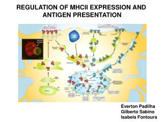 REGULATION OF MHCII  expression and antigen presentation
