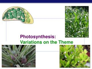 Photosynthesis: Variations on the Theme