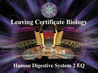 Human Digestive System 2 EQ