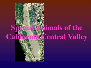 Special Animals of the California Central Valley