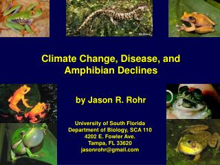 Climate Change, Disease, and Amphibian Declines
