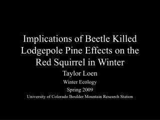 Implications of Beetle Killed Lodgepole Pine Effects on the Red Squirrel in Winter