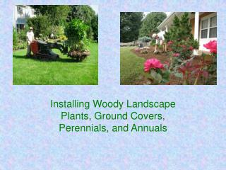Installing Woody Landscape Plants, Ground Covers, Perennials, and Annuals