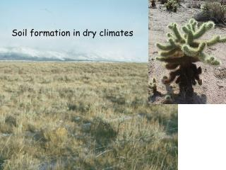 Soil formation in dry climates