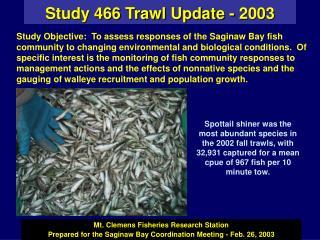 Study 466 Trawl Update - 2003