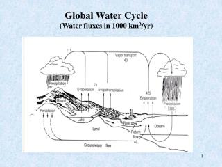 Global Water Cycle (Water fluxes in 1000 km 3 /yr)