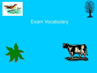 Exam Vocabulary