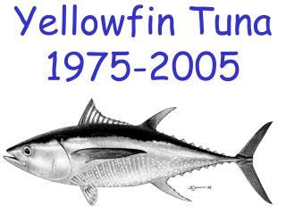 Yellowfin Tuna 1975-2005