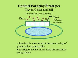 "Optimal Foraging Strategies Trever, Costas and Bill ""International team of mystery"""