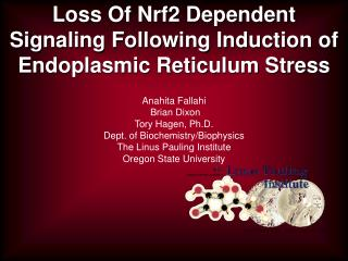 Loss Of Nrf2 Dependent Signaling Following Induction of Endoplasmic Reticulum Stress