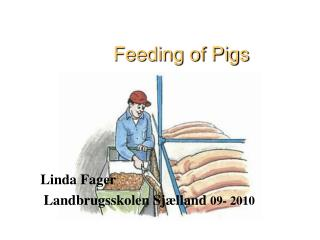 Feeding of Pigs