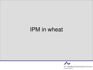 IPM in wheat