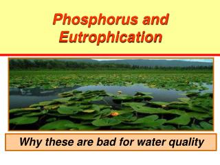 Phosphorus and Eutrophication
