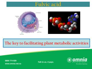 The key to facilitating plant metabolic activities