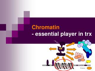 Chromatin  - essential player in trx