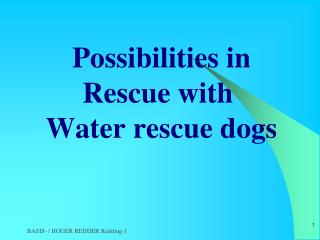 Possibilities in Rescue with Water  rescue dogs