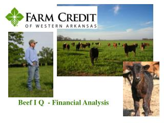 Beef I Q  - Financial Analysis
