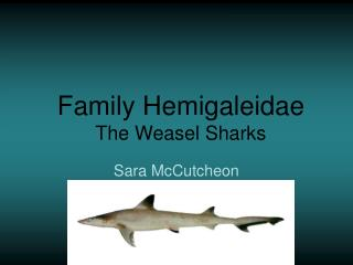 Family Hemigaleidae The Weasel Sharks