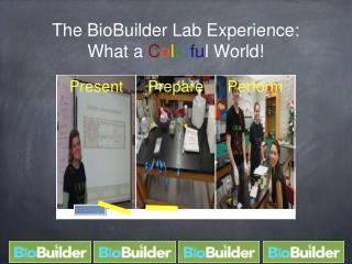 The BioBuilder Lab Experience: What a  C o l o r f u l World!
