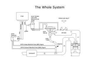 The Whole System