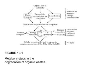 FIGURE 10-1 Metabolic steps in the degradation of organic wastes.