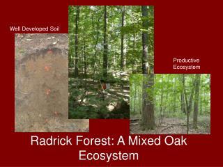 Productive Ecosystem