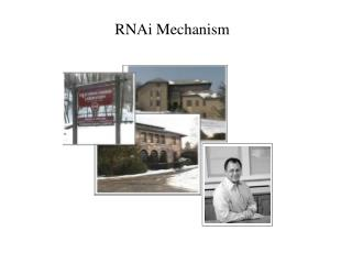 RNAi Mechanism