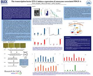 The transcription factor ETS-1 induces expression of senescence-associated PDGF-A