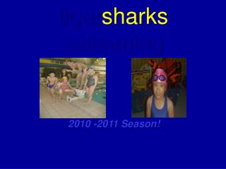 tiger sharks swimming