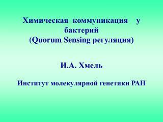 Химическая  коммуникация    у   бактерий     ( Quorum Sensing  регуляция) И.А. Хмель