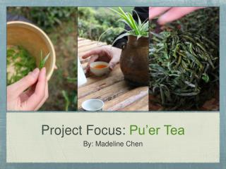 Project Focus:  Pu'er Tea
