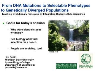 From DNA Mutations to Selectable Phenotypes to Genetically Diverged Populations