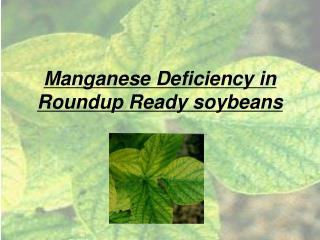 Manganese Deficiency in Roundup Ready soybeans