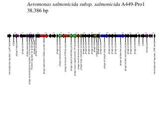 Aeromonas salmonicida subsp. salmonicida  A449-Pro1 38,386 bp