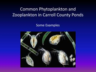 Common Phytoplankton and Zooplankton in Carroll County Ponds