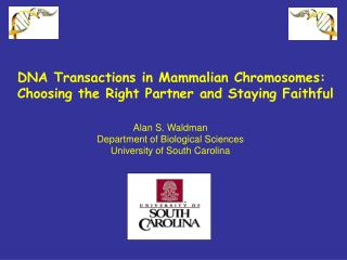 DNA Transactions in Mammalian Chromosomes: Choosing the Right Partner and Staying Faithful
