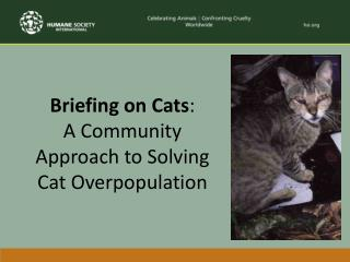 Briefing on Cats :  A Community Approach to Solving Cat Overpopulation
