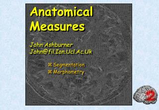 Anatomical Measures John Ashburner John@fil.Ion.Ucl.Ac.Uk
