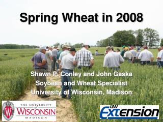 Spring Wheat in 2008