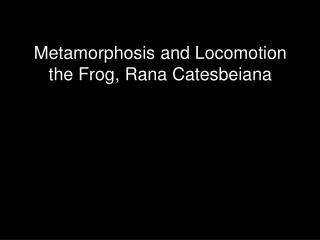 Metamorphosis and Locomotion the Frog, Rana Catesbeiana