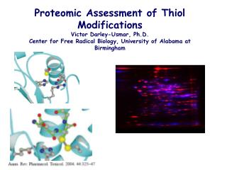 Proteomic Assessment of Thiol Modifications Victor Darley-Usmar, Ph.D.