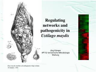 Jörg Kämper MPI für terrestrische Mikrobiologie Marburg